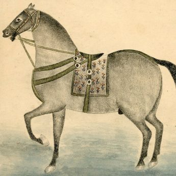 Mughal pen, ink and watercolour study of a horse