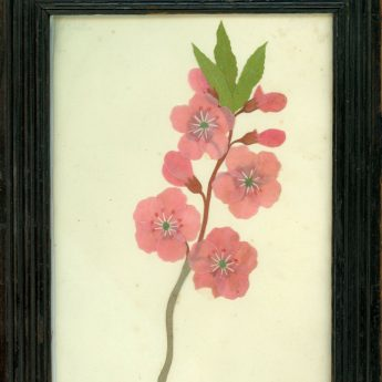Cut paper flower picture in a reeded frame, early 19th century