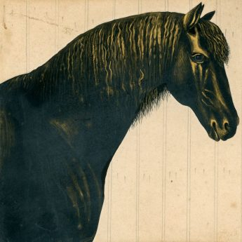 Cut and gilded silhouette of Toby, a bay horse cut by Mr Sharp in 1847