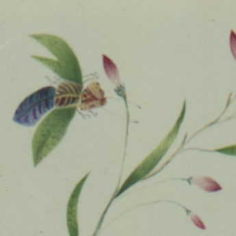 Watercolour of a colourful butterfly and insect